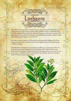 Lorbeere   http://www.kraeuter-verzeichnis.de/