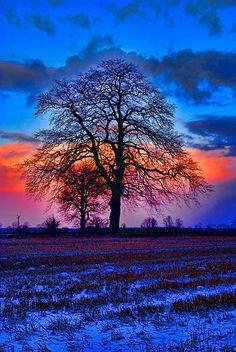 The Winter Tree at Sunrise