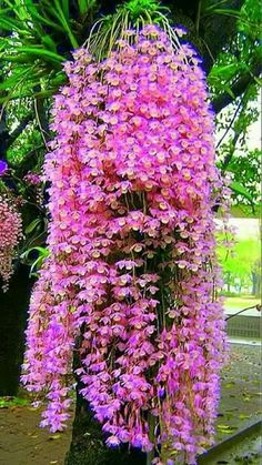 how often do orchids bloom Unusual Flowers, Amazing Flowers, Beautiful Flowers, Simply Beautiful, Blooming Flowers, Tropical Flowers, Dendrobium Orchids, Pink Orchids, Exotic Plants