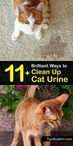 Cleaning Pet Urine, Remove Cat Urine Smell, Cat Pee Smell, Cat Urine Smells, Cleaning Hacks, Organizing Tips, Cat Urine Remover, Urine Odor, Pet Odors