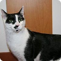 Adopt A Pet :: Nipper Kitty - Philadelphia, PA