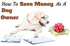 24 simple ways to save money as a dog owner