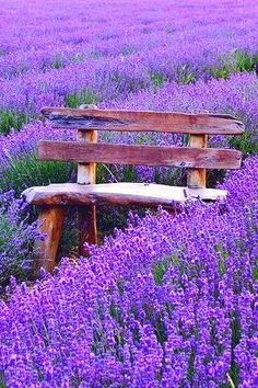 Come with us to Provence this May. GG2P