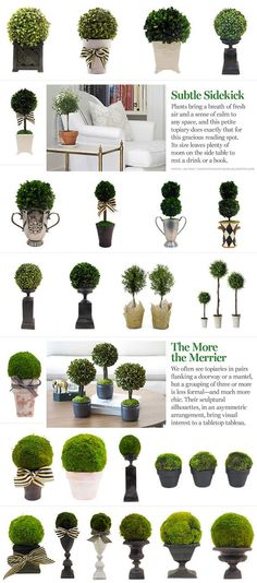 INSPIRATION :: Ideas for topiary arrangements...from #OneKingsLane. Moss balls & boxwood, pots & urns...: