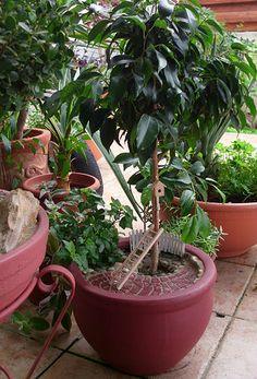 Miniature Gardening in Nikosia, Cyprus