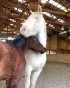 a32140dee5bd2 Heartbroken Wild Horse Transforms When She Meets Orphaned Foals