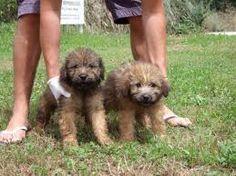 - Friends, Dogs, Dog Breeds, Amigos, Boyfriends, Pet Dogs, Doggies, True Friends, Dog