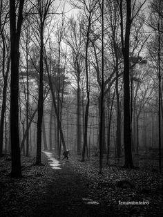 The Photgrapher. Mud, North America, Explore, Black And White, Canada North, Ottawa Ontario, Plants, Darkness, Black N White