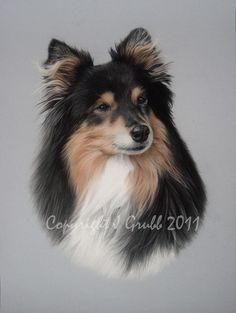 Pastel Pet Portraits - Shetland Sheepdog