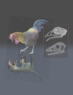 LIKE A BIRD – Les oiseaux pourraient être des dinosaures qui n'ont jamais grandi. (Rosie est d'accord;-)