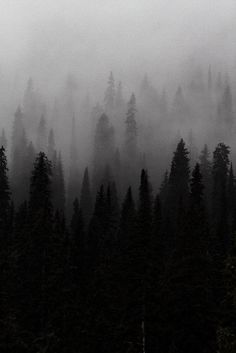 Designspiration is the hub for discovering great art, design, architecture, photography, typography and web inspiration. Dark Forest, Foggy Forest, Misty Forest, Blue Aesthetic, Architecture, Landscape Art, Black And White Photography, Mists, Nature Photography