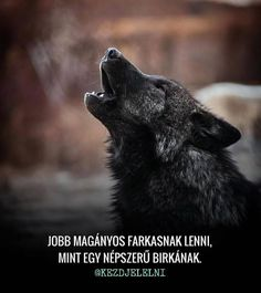 Wolf Warriors, Beautiful Small Tattoos, Books For Boys, Proud Of You, Life Advice, Mbti, Picture Quotes, Animals Beautiful, Quotations