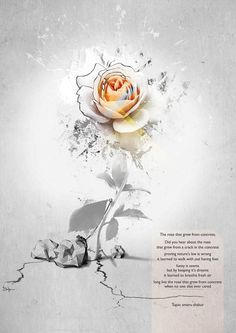 tupac shakur poems rose grew concrete the rose that grew from concrete by ivensstf on deviantART
