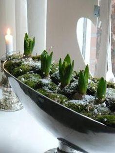 Glühbirnen - - - New Ideas Woodland Christmas, Christmas Love, Garden Bulbs, Garden Plants, Amaryllis Bulbs, Spring Bulbs, Vintage Planters, Bulb Flowers, Deco Table