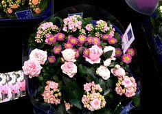 Feria Essen. Flower  http://elinvernaderodenaan.es/archivos/1013