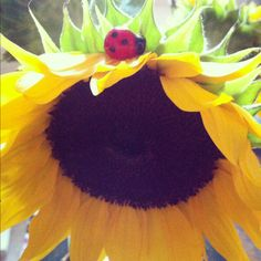 my two favorites. lady bug is not real but the flower is (pic taken with iphone).