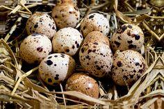 ovos de codorna - Google Search