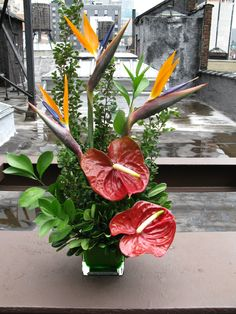 Birds of Paradise and Anthurium create a visually interesting and unique floral arrangement