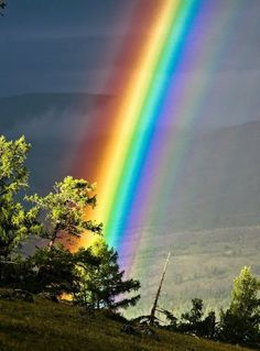 These photos are so perfectly timed, it beggars belief. In addition, they're also supplemented by truly stunning nature and wildlife. View these 15 images now. Rainbow Magic, Love Rainbow, Over The Rainbow, Beautiful Sky, Beautiful World, Beautiful Landscapes, Beautiful Pictures, Saint Esprit, Natural Phenomena