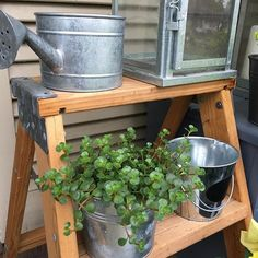 I have had my coffee and now going to get ready for a morning of thrifting. What are your plans for this sunny Saturday? #michiganweather #michiganlove #michigan #plants #galvanized #galvanizedbuckets #galvanizedmetal #ikea #ikealove #ikealantern #frontpo