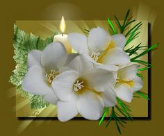 Fehér virágok gyertyával.