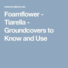 Foamflower - Tiarella - Groundcovers to Know and Use