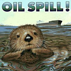 Cleaning Up an Oil Spill (Environmental Engineering): For this science project, you will compare the absorptivity of different sorbents used for cleaning up an oil spill in water.