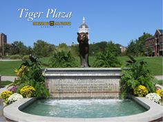 Tiger Plaza-one of my favorite views