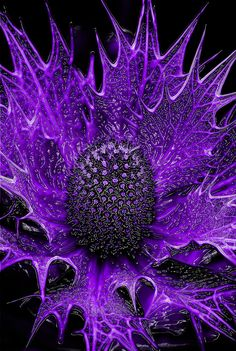 ~~Alien Plant Life 01 ~ abstract purple Eryngium maritimum, commonly known as sea holly by Carl Thompson~~
