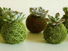 to Make a Succulent Kokedama How to Make a Succulent Kokedama: Kokedama design is a great way to incorporate your favorite succulents indoors, outdoors, or for a show-stopping element at a party or event.How to Make a Succulent Kokeda. Succulent Garden Diy, Garden Crafts, Kokedama, Succulents Diy, Succulent Terrarium, Hanging Plants, Succulents, Plants, Outdoor Cactus Garden