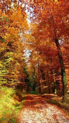 Fall= beauty on its own