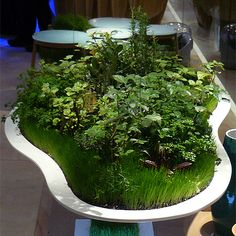I could see this as a super cool herb garden in the kitchen.