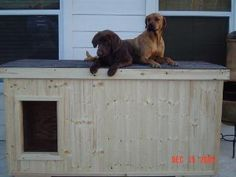 Copper and Cocoa - Texas:  several years of being tried and tested, this dog house has been proven to be the most comfortable and the safest home you can build for your beloved dogs.