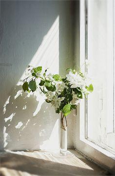 freshly cut flowers in window light / white flowers are my favorites. Light is gorgeous! Fresh Flowers, White Flowers, Beautiful Flowers, Summer Flowers, Deco Floral, Arte Floral, Ikebana, Flower Power, Pot Plante