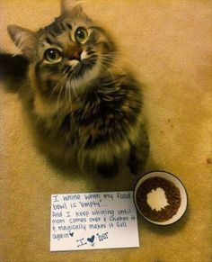 Funny kitty cat, fill my bowl!