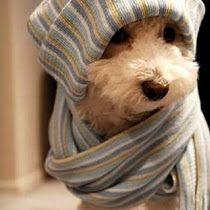 Agasalho para cachorro: Modelos, Fotos e Preços