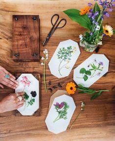 DIY Plantes séchées