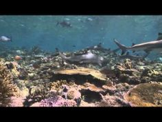 Micronesia Speaks Up to Save Sharks