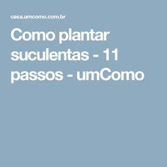 Como plantar suculentas - 11 passos - umComo
