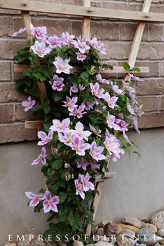Vine Gallery Pretty pink clematis vine on a trellis.Pretty pink clematis vine on a trellis.Flowering Vine Gallery Pretty pink clematis vine on a trellis.Pretty pink clematis vine on a trellis. Climbing Clematis, Clematis Trellis, Clematis Plants, Vine Trellis, Garden Trellis, Room With Plants, House Plants, Moon Garden, Garden Yard Ideas