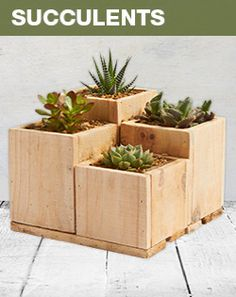 Succulents are great low-maintenance plants that produce beautiful flowers and come in an abundance of shapes and sizes.