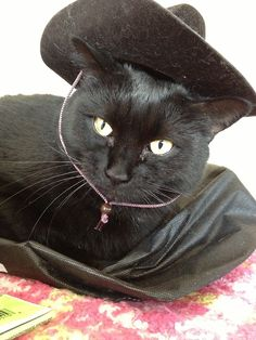 25 Best Cats In Cowboy Hats Images Cats Cowboy Hats