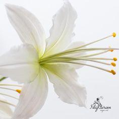 Sugar Flowers by Filiz Bircan Sugar Art