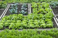 Shade Tolerant Vegetables - Growing Vegetables In A Shady Garden