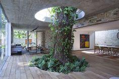 árbol cocina troncos dentro de casa / Hogares diferentes: casas con árboles en su interior #hogarhabitissimo #organic #naturaldeco