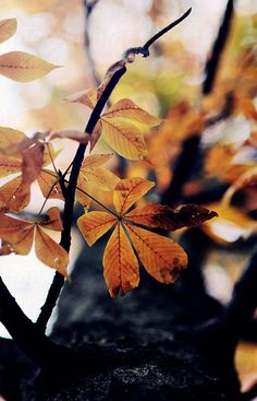 """~ Autumn ~ """"Days decrease, / And autumn grows, autumn in everything."""" ~ Robert Browning"""