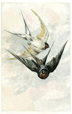 Vintage-Swallows-Image-GraphicsFairy.jpg (1131×1800)