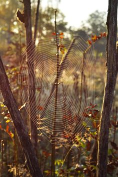 *Going on an early morning walk in autumn might mean the discovery of dew laden spider webs on fences and bushes! Spider Art, Spider Webs, Itsy Bitsy Spider, Web Design, Mabon, Amazing Spider, Sculpture, Photos, Pictures