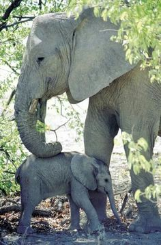 Elephant mother with her youngster .
