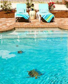 Pool Floor Mosaic Sea Turtles
